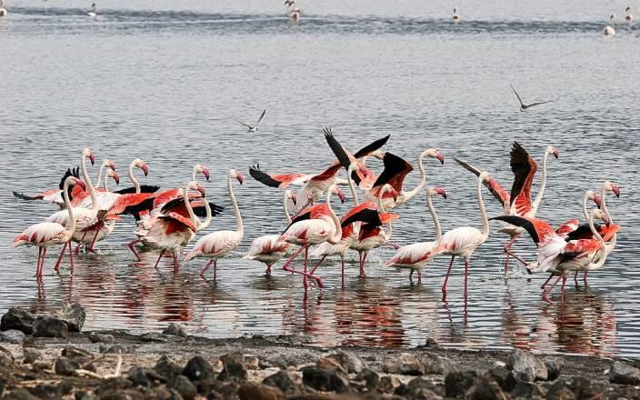 Lake_Bogoria_National_Reserve_013
