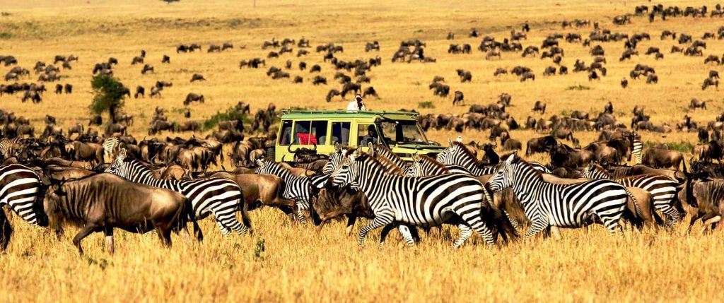Serengeti-National-Park-1