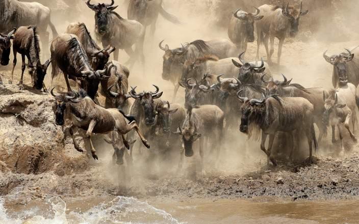 Masai_Mara_National_Reserve_003