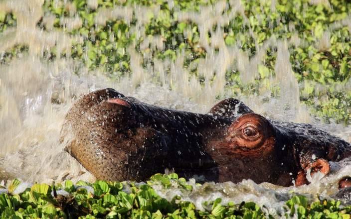 Masai_Mara_National_Reserve_011