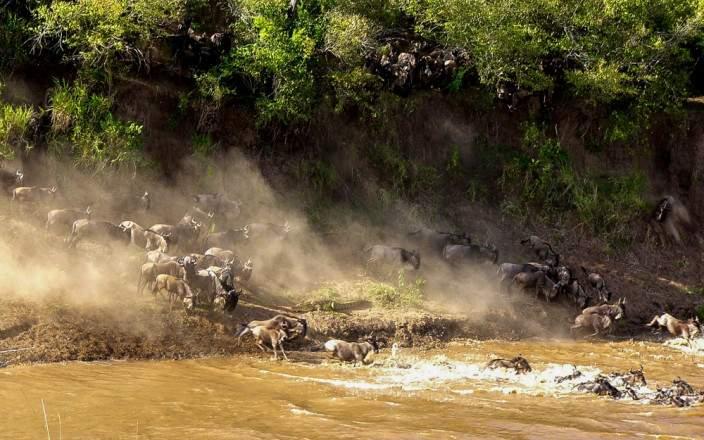 Masai_Mara_National_Reserve_013