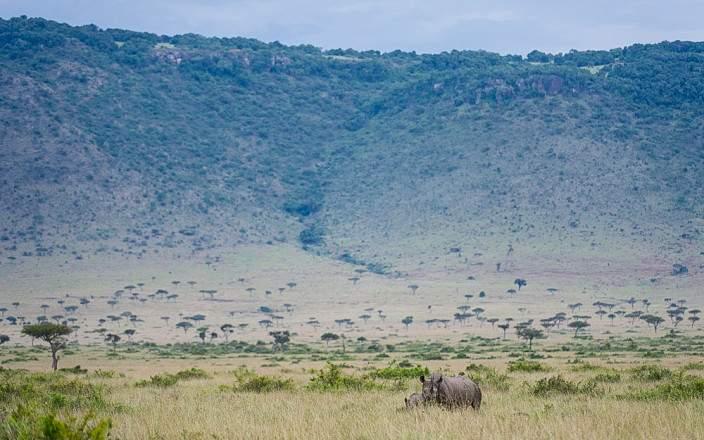 Masai_Mara_National_Reserve_044