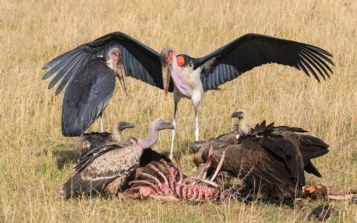 Masai_Mara_National_Reserve_053