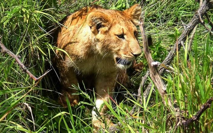 Masai_Mara_National_Reserve_063