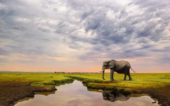 Masai_Mara_National_Reserve_077