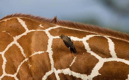 Samburu_National_Park_010