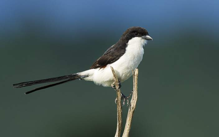 Taita_Hills_Wildlife_Sanctuary_002