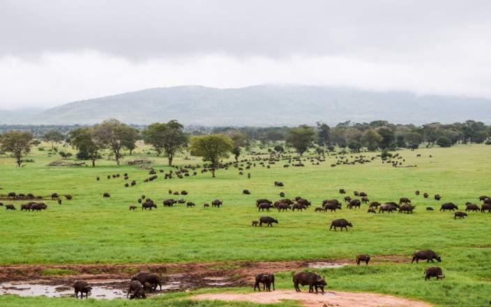Taita_Hills_Wildlife_Sanctuary_006