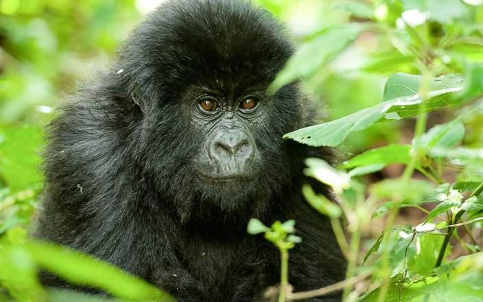 Virunga_National_Park_016
